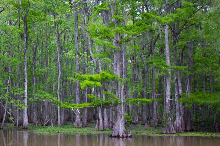 I Say Nomato Travels: Louisiana!