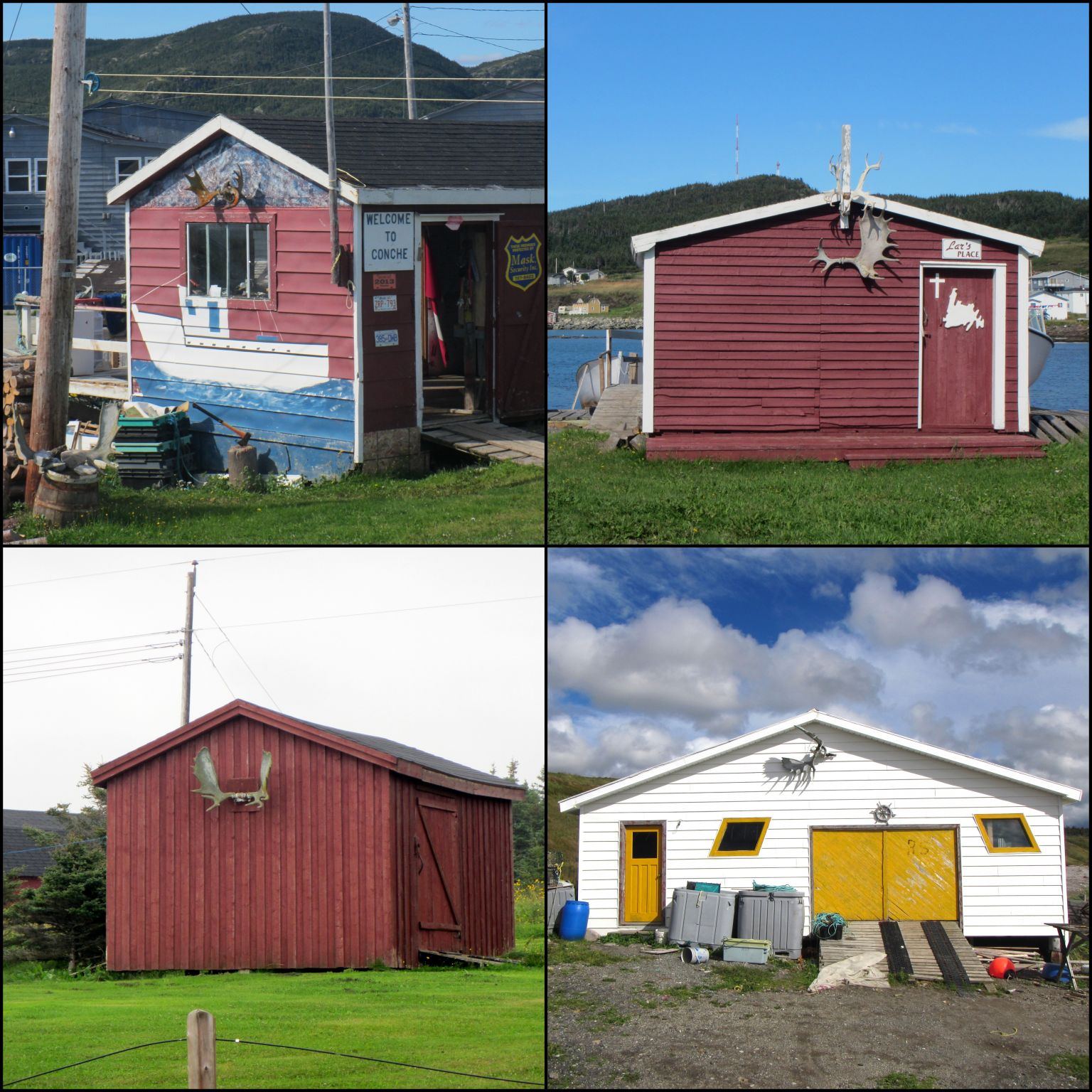 Newfoundland6