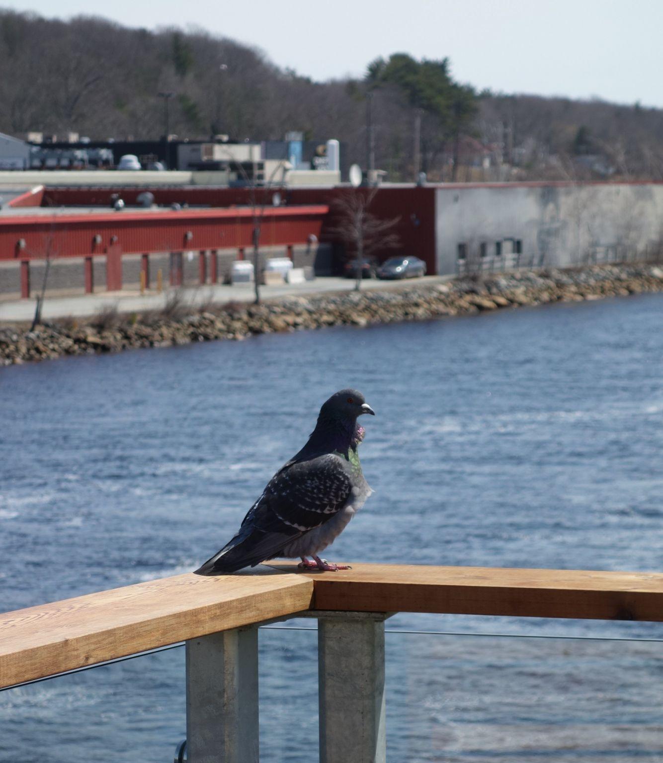Noticed In Nova Scotia: Roll On Big Pijinuiskaq, Roll On.