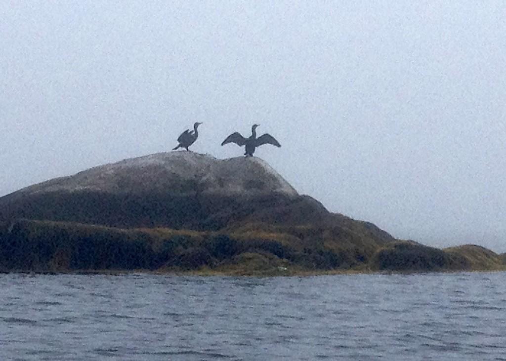 Birds Nova Scotia Prospect