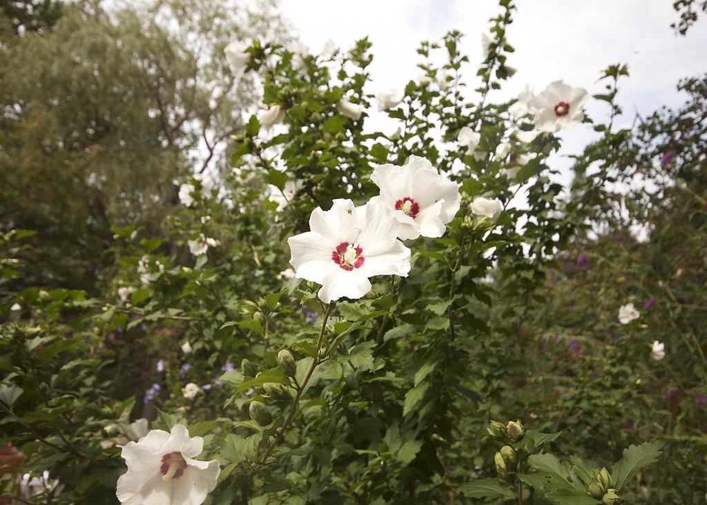 Flower Annapolis Valley Historic Gardens