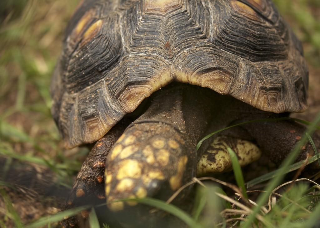 Turtle Nova Scotia