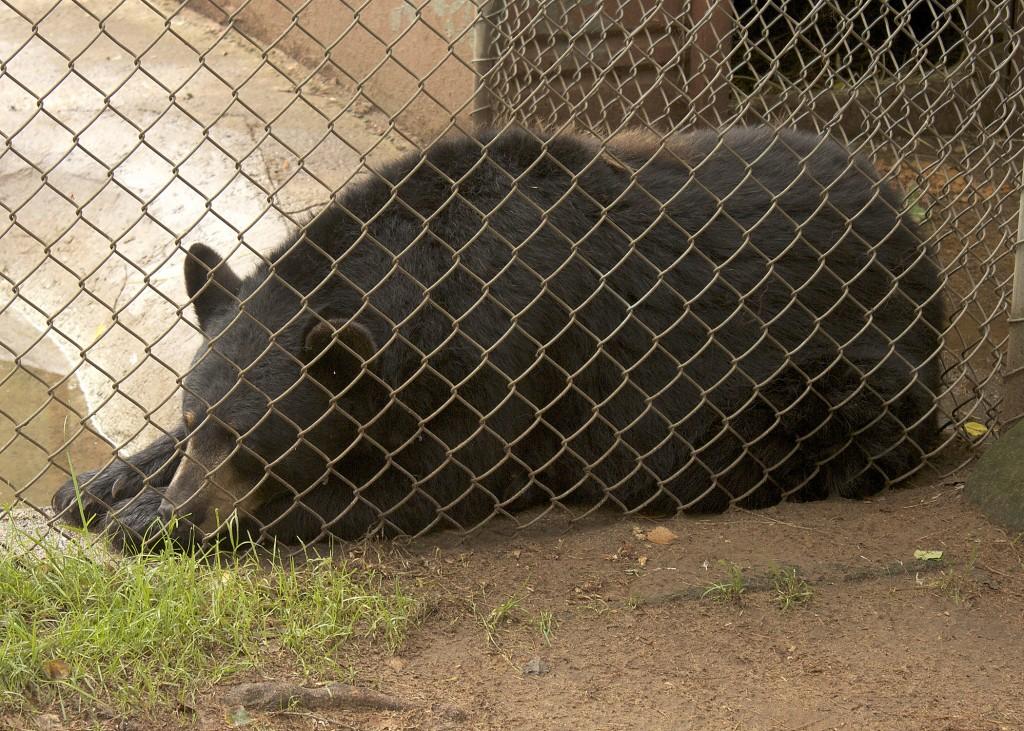 Oaklawn Farm Zoo Bear Nova Scotia