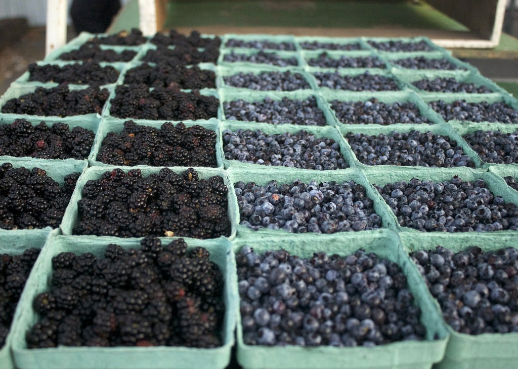 Lunenburn Market Nova Scotia Blueberries