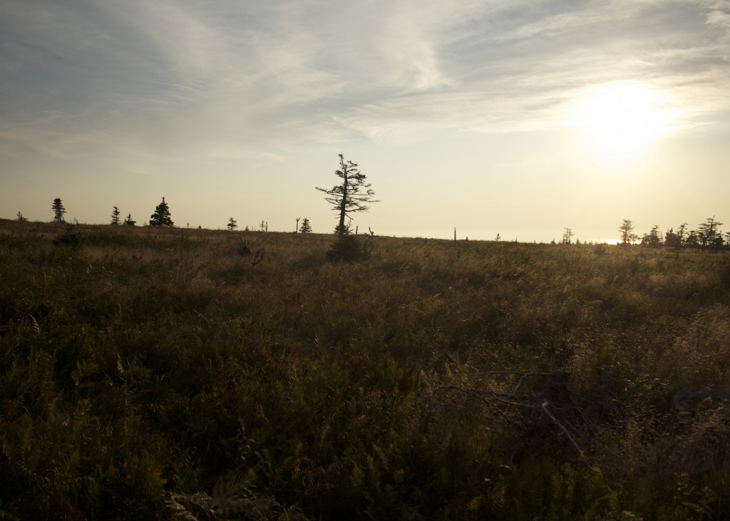 Cabot Trail Field Nova Scotia Sunset