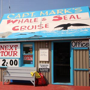 Captain Mark's Whale Watching – Pleasant Bay
