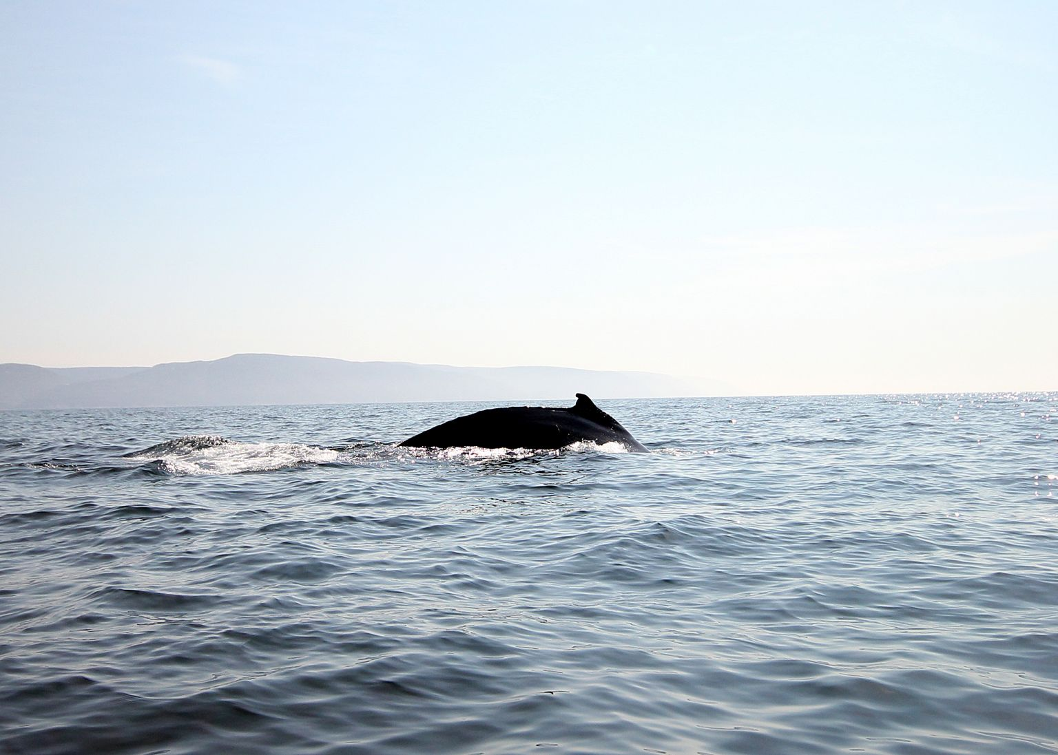 Whale Sighting Cape Breton Adventure Tours