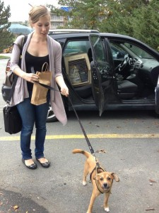 Dog Friendly Travel Dog Road Trip Nova Scotia Canada