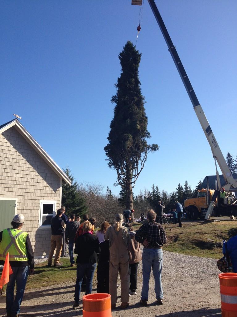 Tree for Boston Halifax Explosion Christmas Gift
