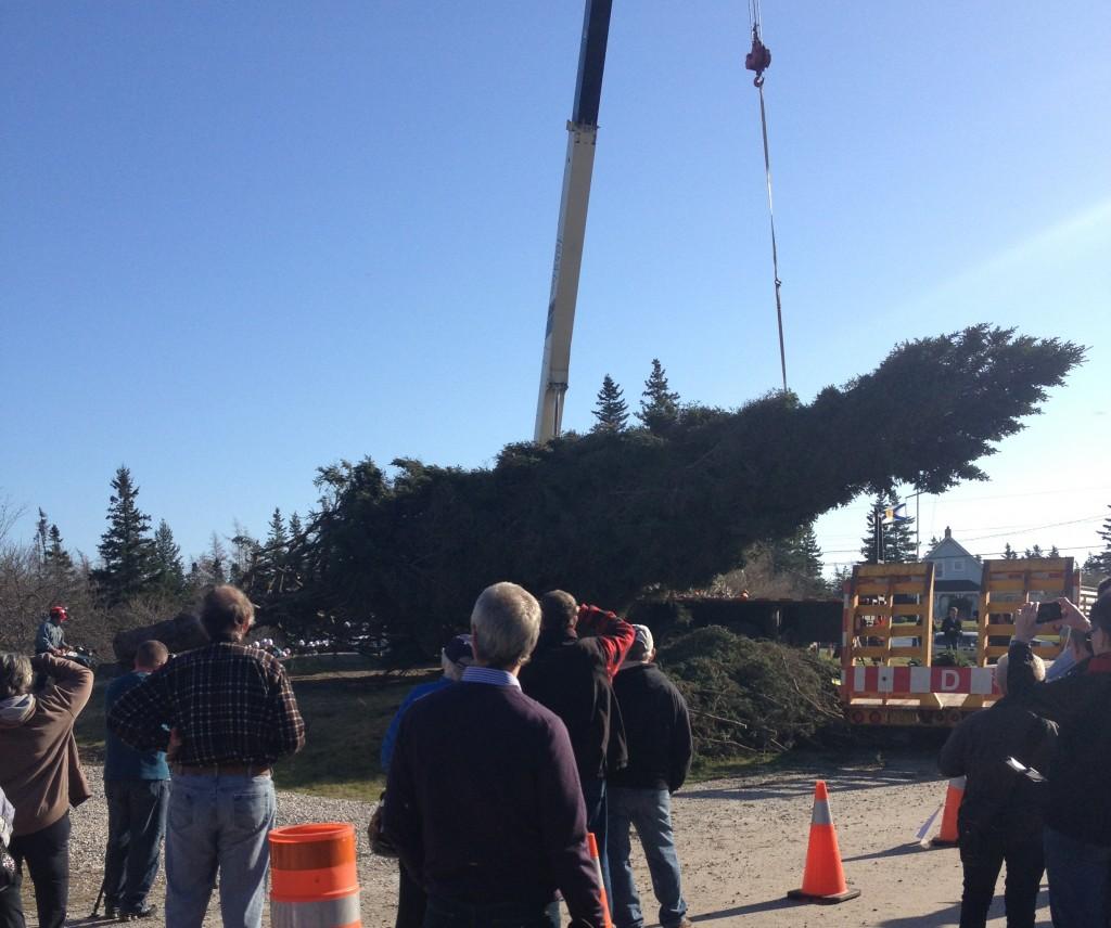 Successful Tree Cutting