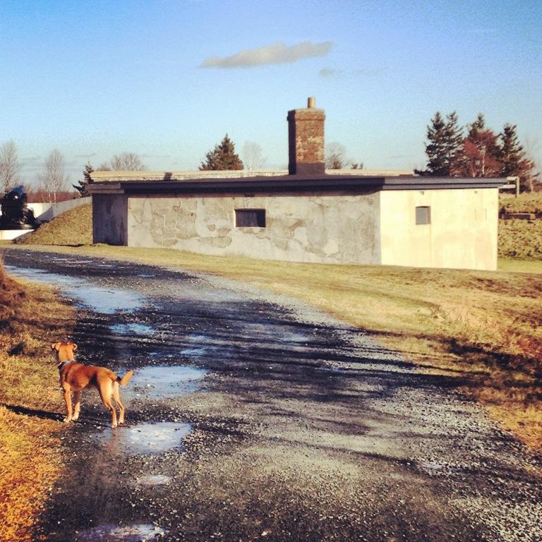 Dog looking at historic building York Redoubt Halifax Nova Scotia
