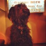 Carter the Dog from Urban Almanac