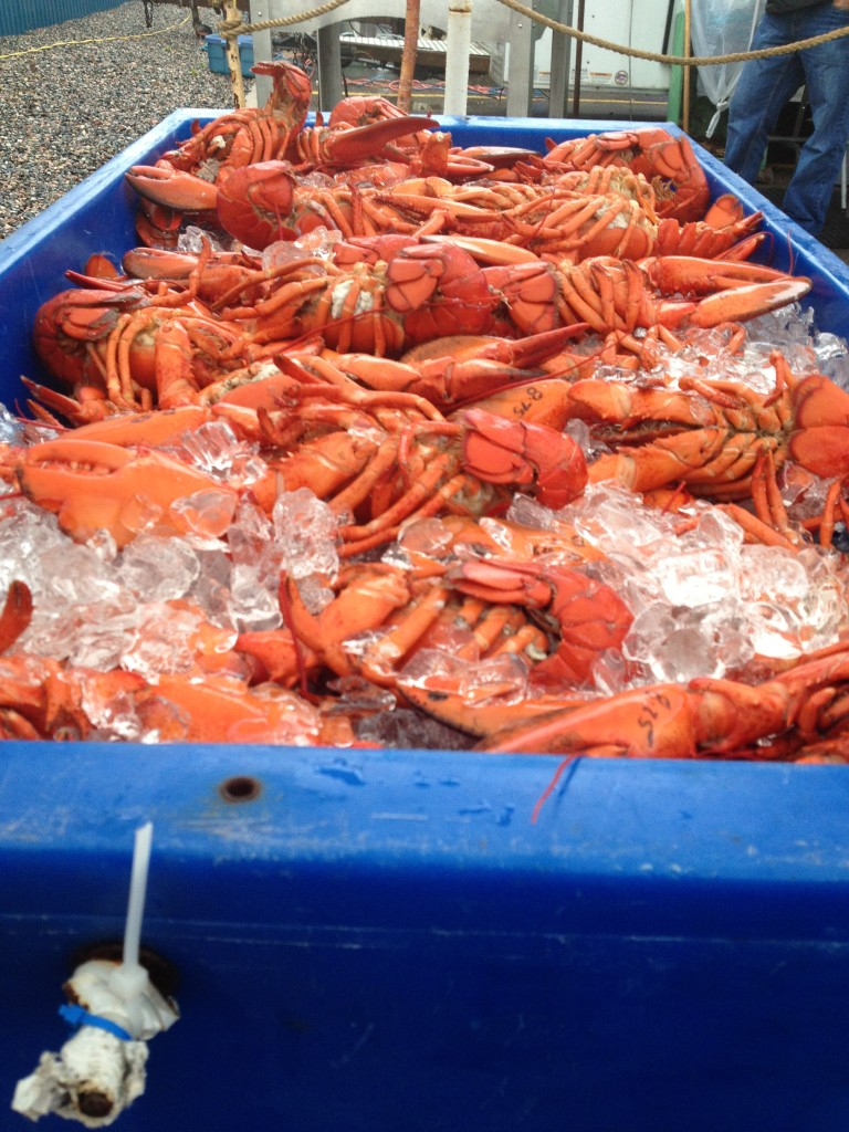 Lobster at the Fredericton Market