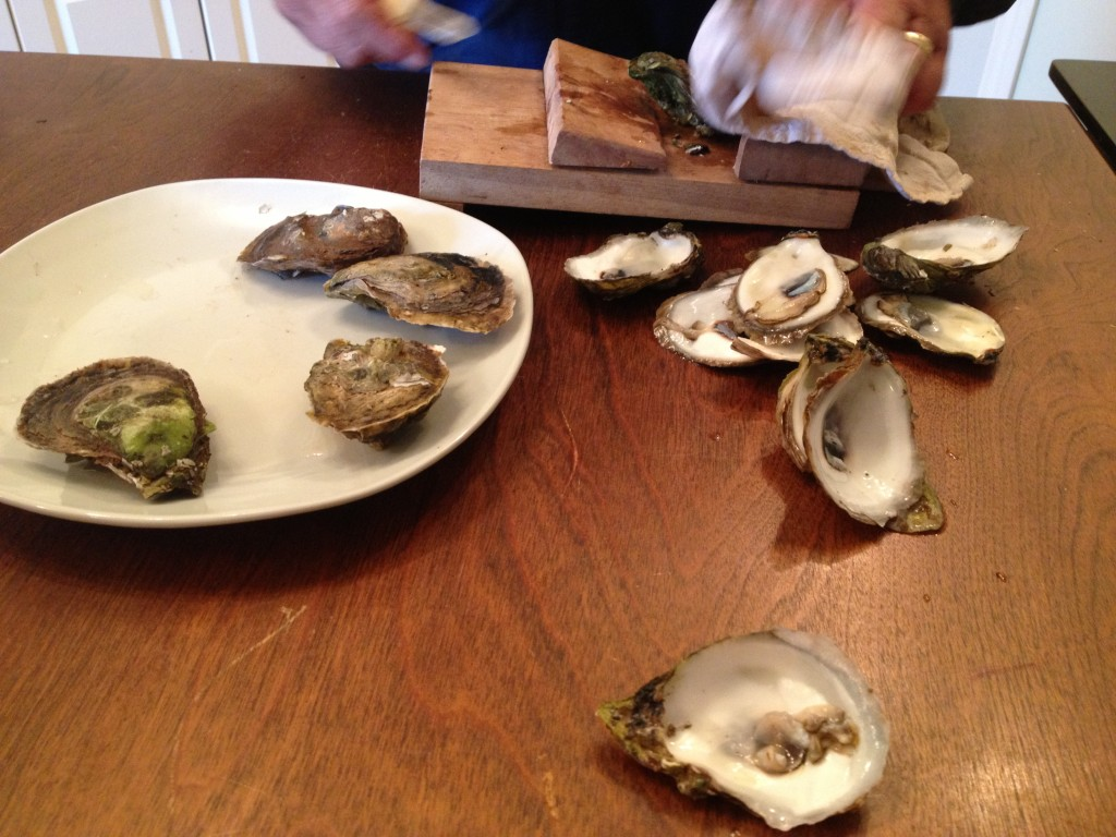 Shucked PEI oysters at the tong and shuck PEI experience tour