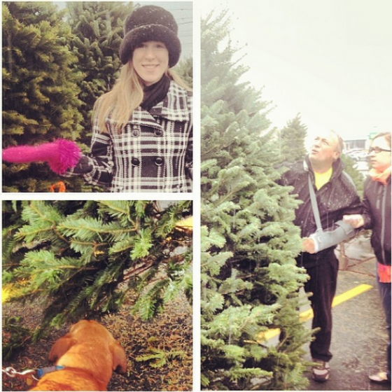 Search for the perfect Nova Scotia Christmas Tree