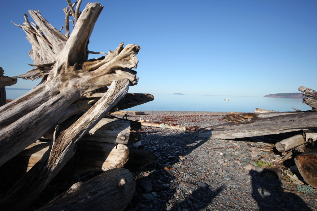 Driftwood park2