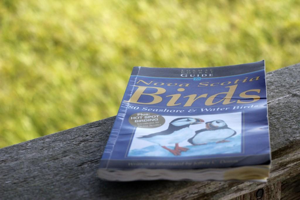 Mavillette Beach Bird Watching