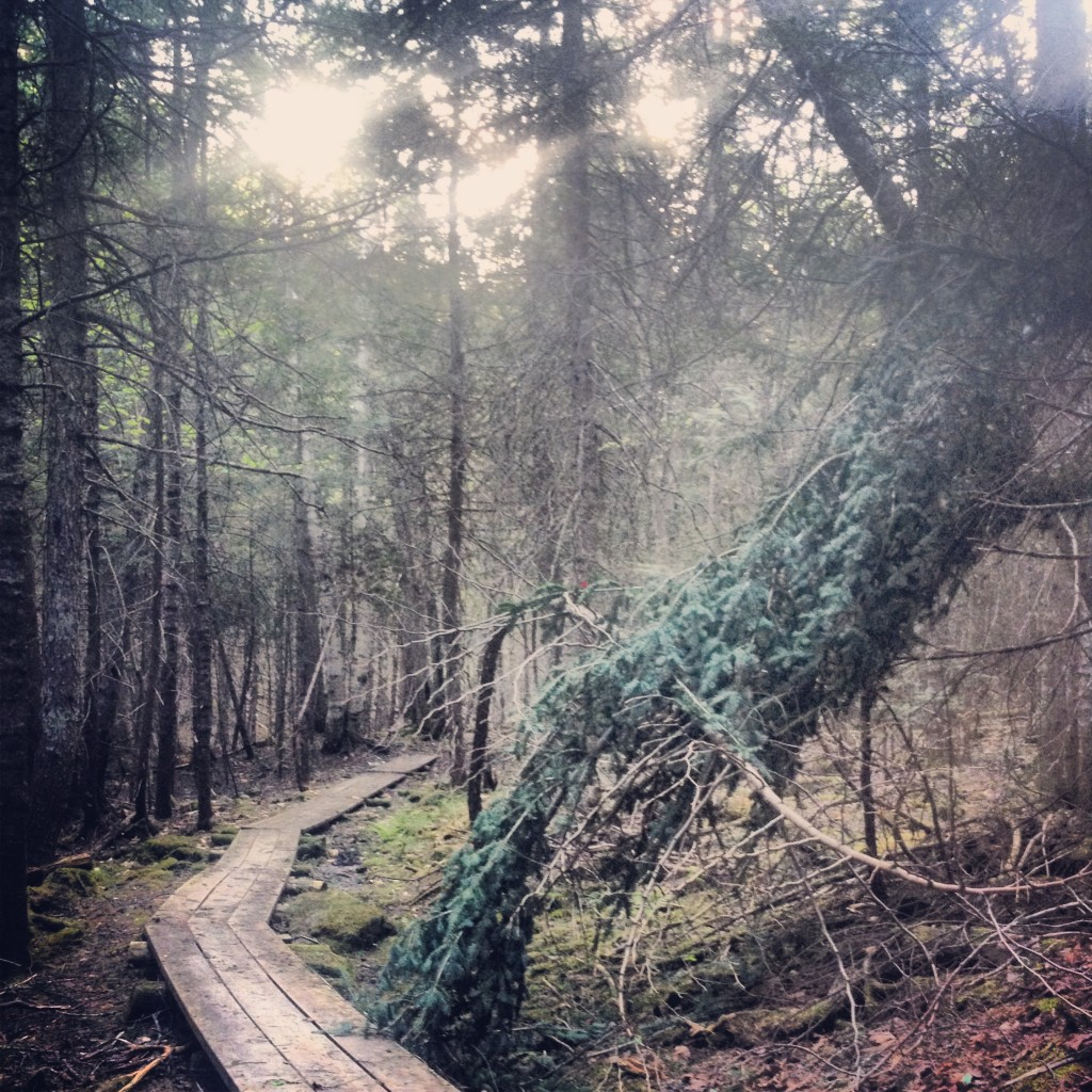 Mactaquac Park Trails Fredericton
