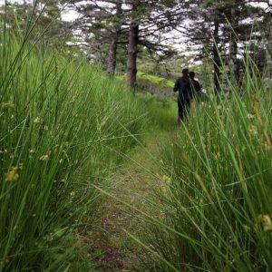 Le Petit Bois Tours – Church Point, NS