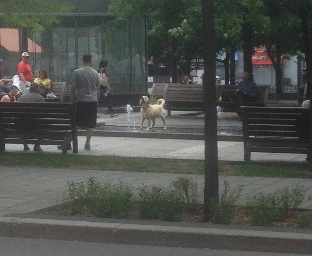 This dog was having a Montreal culinary experience all his own, barking at the park fountain...