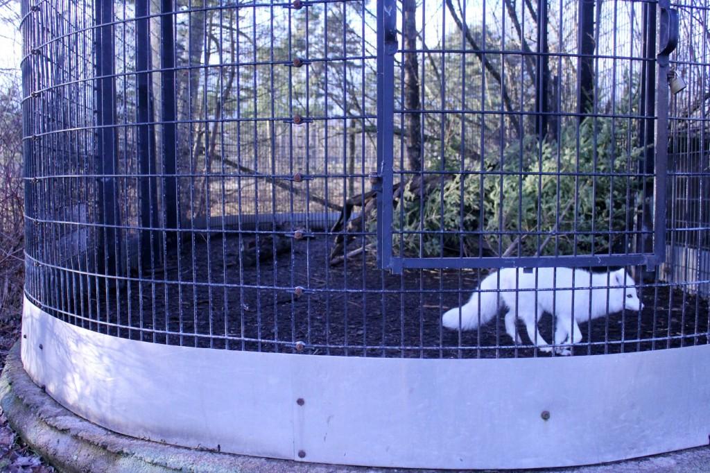 shubenacadie Wildlife park santa
