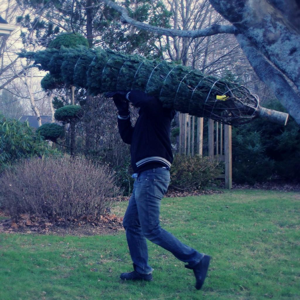 tree20145