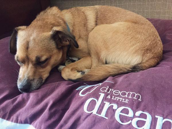 Sheraton Portsmouth Dog Friendly