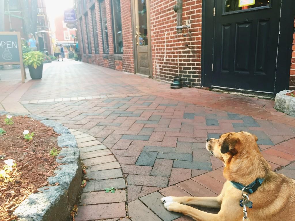 Portsmouth New Hampshire Dog Friendly
