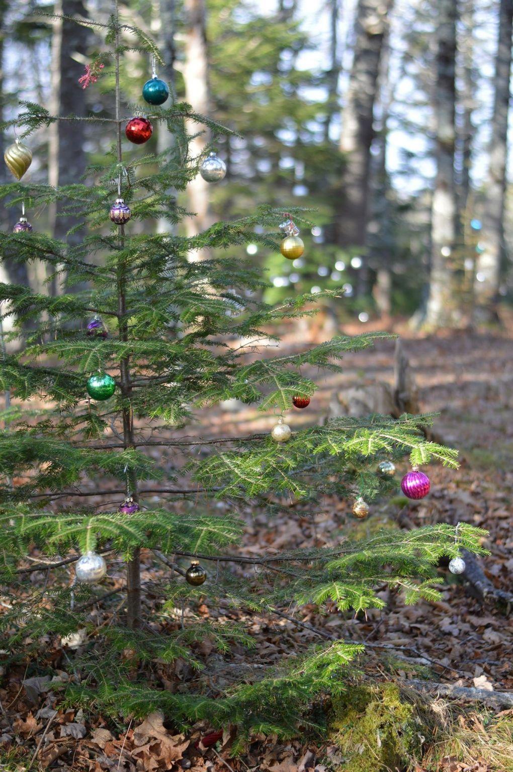 Le Peitit Bois Christmas Display