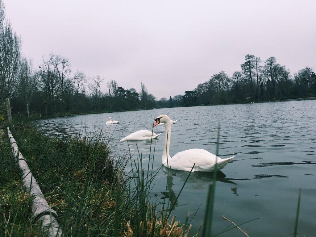 Swans Paris
