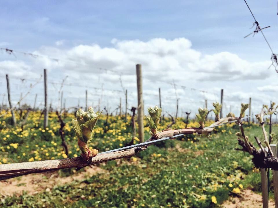 Blomidon Winery