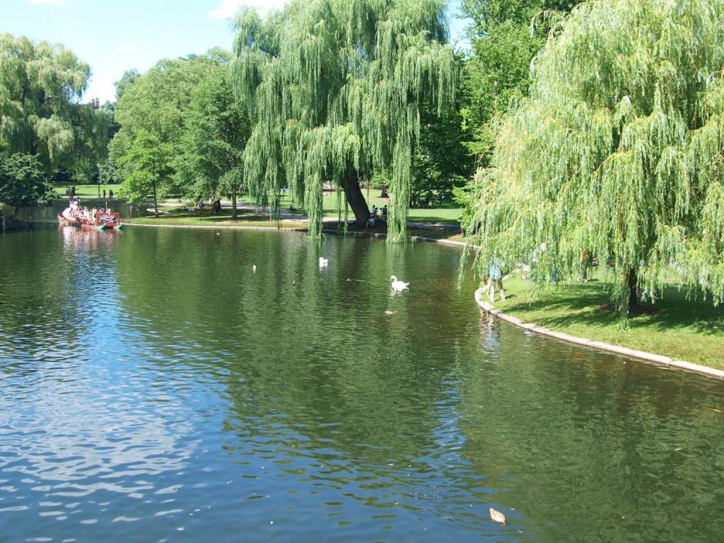 The Boston Common Swan Boats