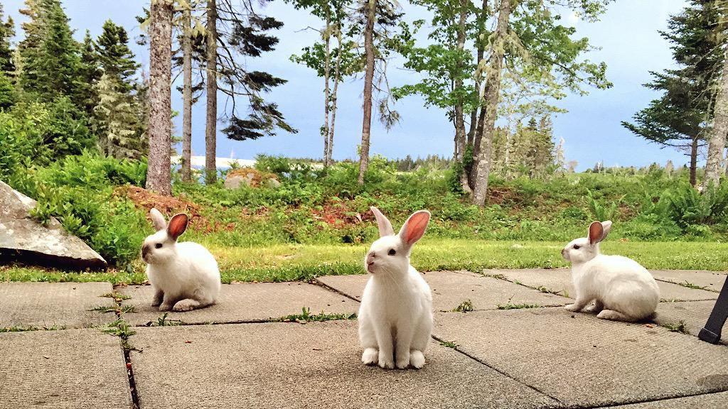 Bunnies White Point Beach Resort